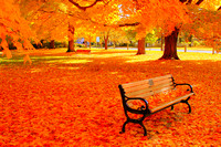 Fall Bench - Newburyport, MA