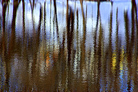 'Patten's Pond Reflections' - Amesbury, MA